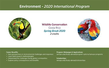 Environment - 2020 International Program Image