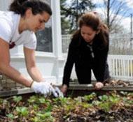 Edible Garden Open